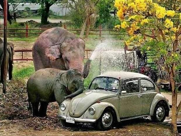 Прикольные фотографии слонов (17 Фото)