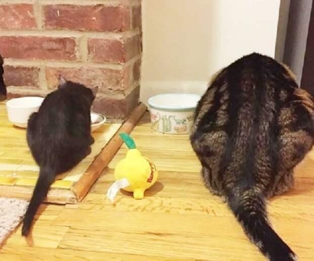 Коты кушают