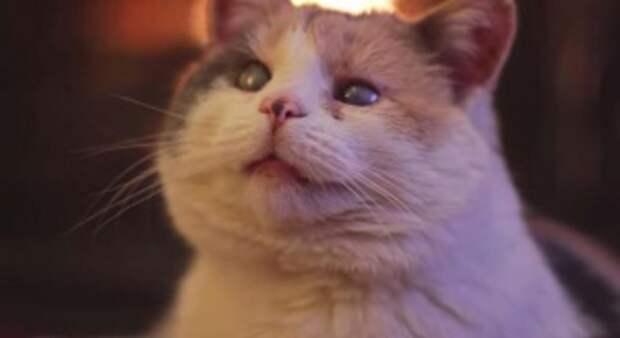 Старая слепая кошка Стиви навсегда изменила жизнь этого парня