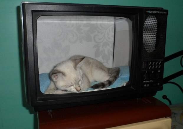 домик для животных из телевизора