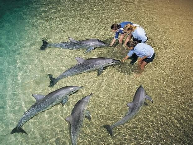Пляж Манки-Миа, Австралия …