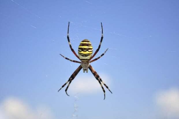10 самых странных экспериментов с насекомыми