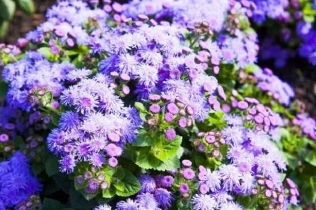 Какие цветы посадить, чтобы всю осень на участке было красиво