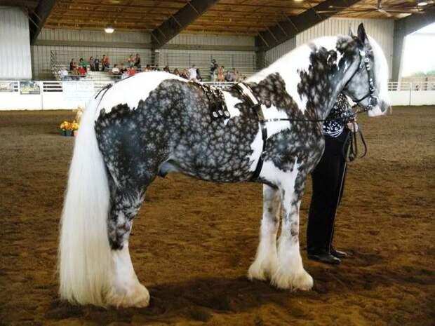 Серебристо-гнедая животные, лошадь
