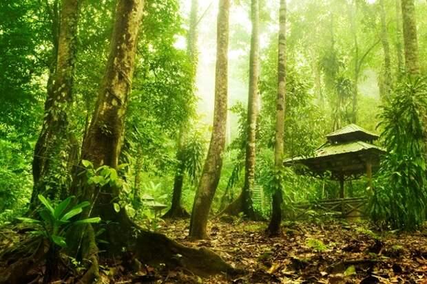 Ученые обнаружили в джунглях Гондураса затерянный город