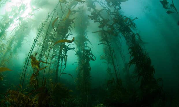 Обнаружена уникальная экосистема в океане, которой не страшны изменения климата