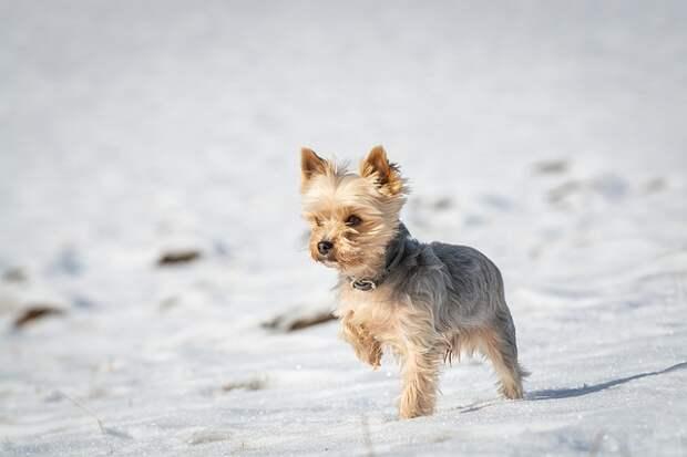 Отрадное признали одним из лучших районов для жизни с собакой