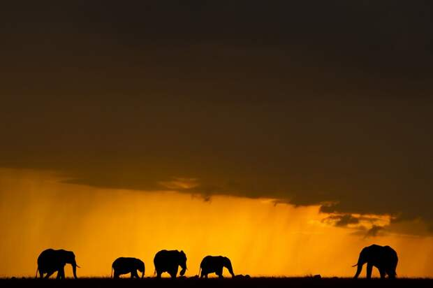 afrikanskie zakaty 8 Потрясающие африканские закаты от Пола Гольдштейна