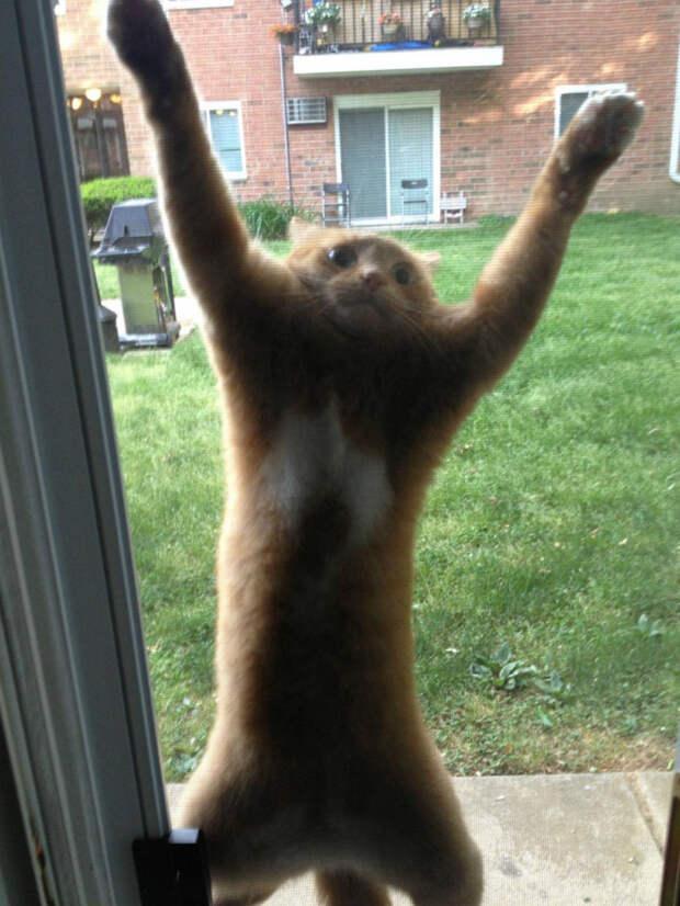 """2. """"Дайте мне свободы!"""" животные, кот, юмор"""