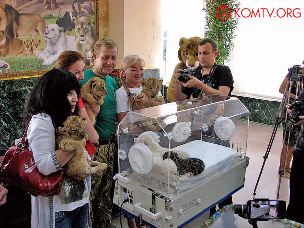 Счастье директора зоопарка – когда у него куча малышей.