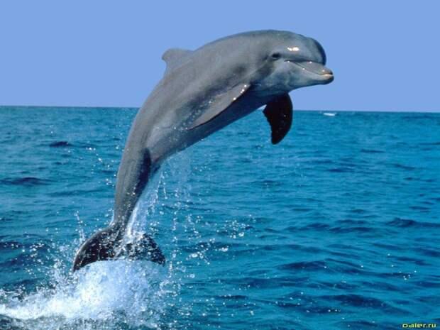 Дельфины — самые интеллектуальные существа на планете