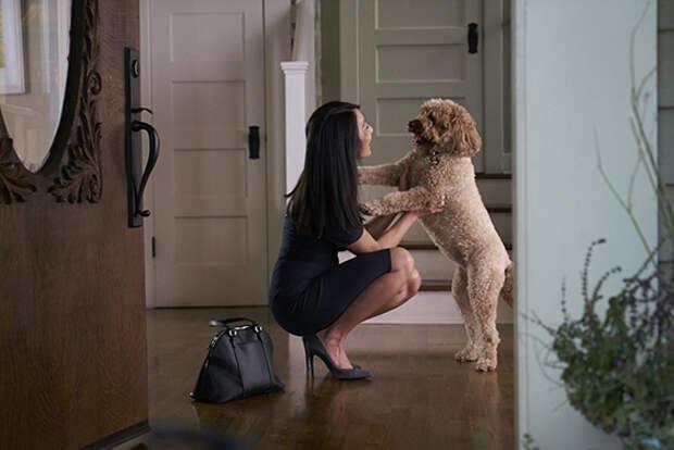 Важней всего - собака в доме