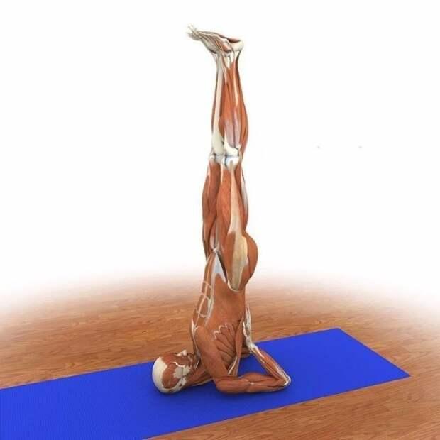Упражнения, которые избавят от усталости и боли в спине