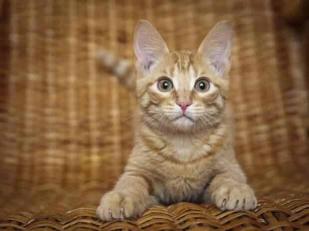Пятничные котики: кому Шмеля?