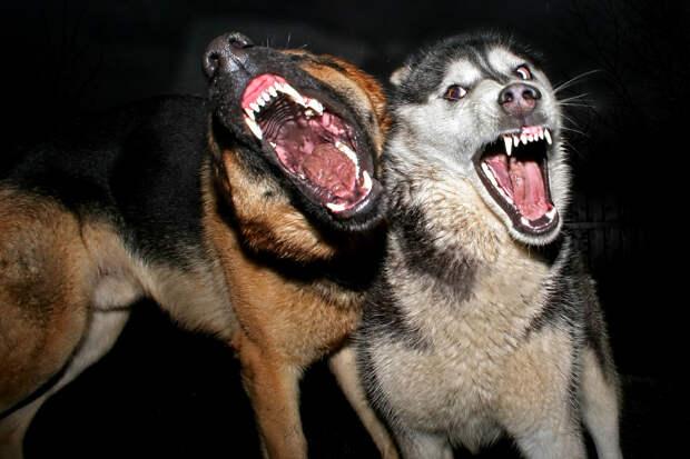 Страшная смерть — бродячие собаки насмерть загрызли ребенка в Башкирии