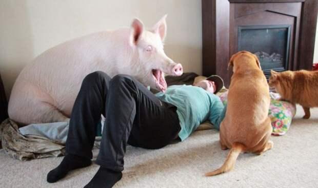 Эстер прекрасно ладит с кошкой и собакой  девушки, животные, прикол, юмор