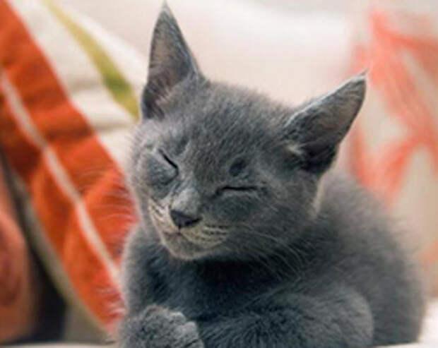 Кошки и отношения