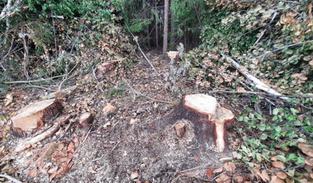 Общественники просят проверить законность вырубки деревьев в Балезинском районе