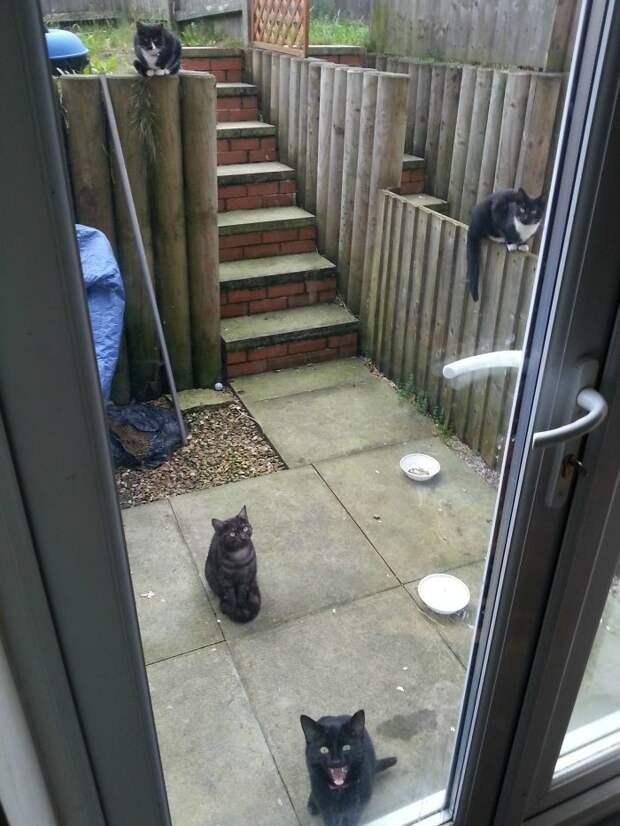 Иногда кошки бывают очень настойчивы встреча, гости, дружба, животные, коты, кошки, неожиданно, фото