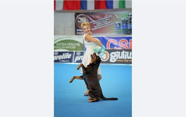 Весь мир увидит, как россияне танцуют со своими собаками