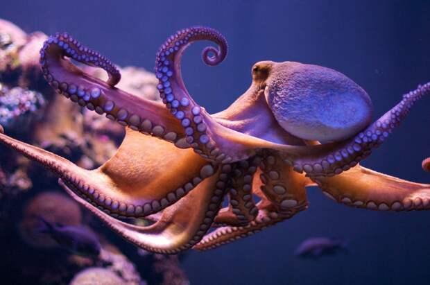 Новозеландцы научили осьминога фотографировать