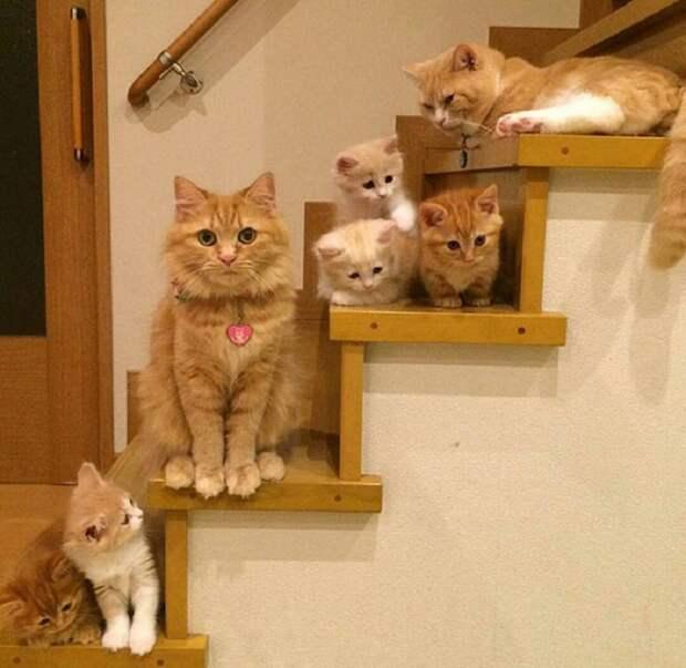 Папа, мама, я - счастливая семья...