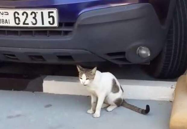 Эта бездомная кошка с сердечком на шерсти просила не еды, а ласки