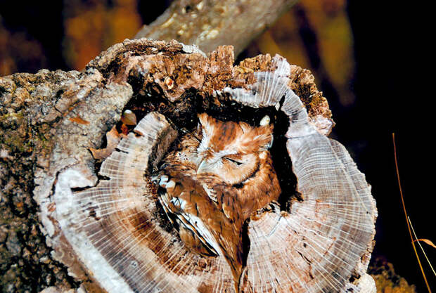 owl-camouflage-disguise-1