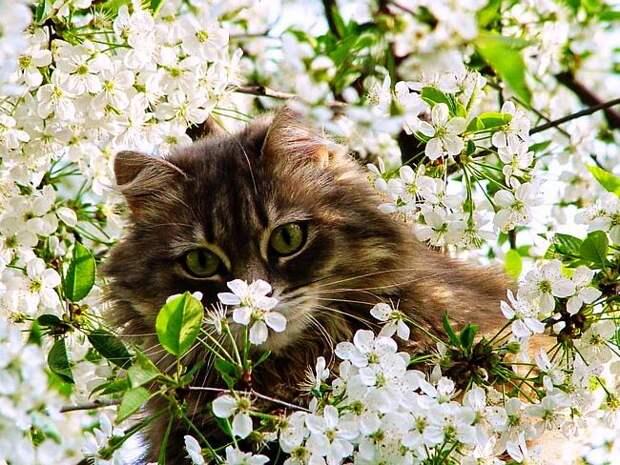 Кошки и весна :: Блог Лики: Это интересно, страшно и смешно