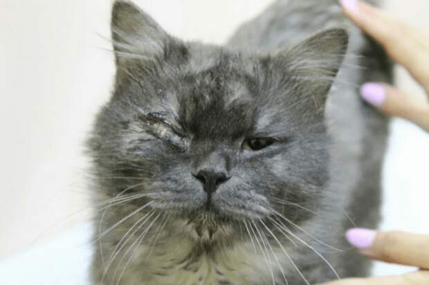 История о котике Тоше: у него не было дома и ему повредили глаз злые люди
