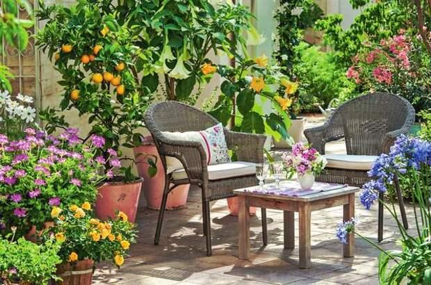 Бругмансия (Brugmansia) в благодарность за полив и подкормки дарит цветки, источающие нежный аромат.