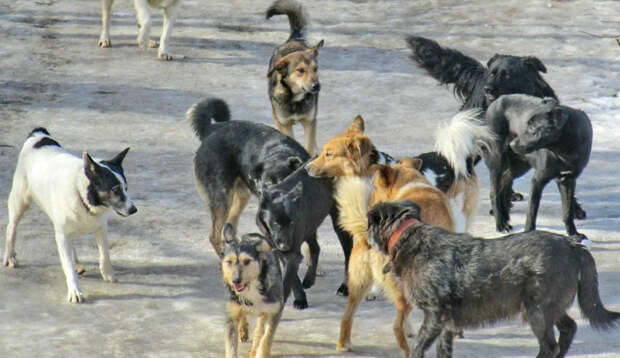 Пострадавшую от нападения собак жительницу Улан-Удэ перевезут в Москву