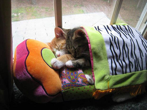 16. В кроватке котенок, сон