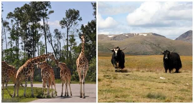 Природный туризм: Россия vs Америка