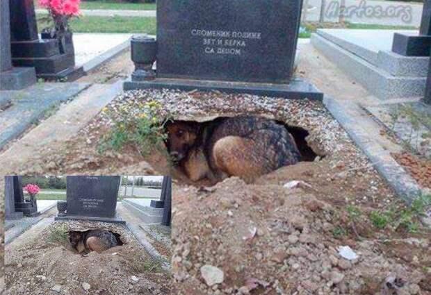 Эта собака осталась преданной своему хозяину даже после его смерти