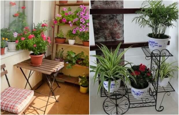 На балконе удобно хранить комнатные цветы