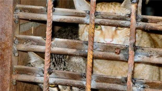Животных замуровывают живьем в подвалах Краснодара