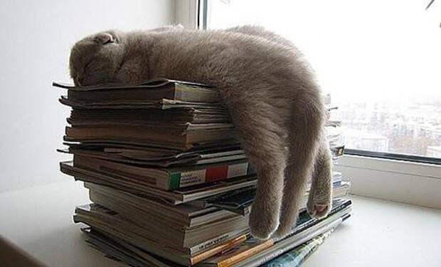 Ох уж эта мне учеба, лучше вздремну животные, кот, прикол, сон