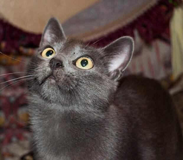 Зачем кормить кота? Пусть ловит мышей!