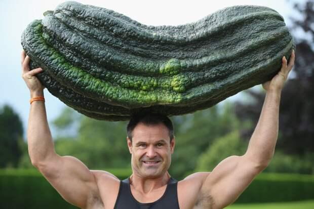Кабачок весом 53 килограмма. огород, самые большие овощи, урожай