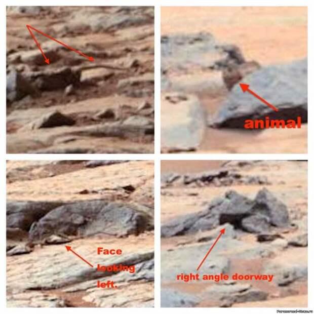 Новые загадки Марса: птица среди камней
