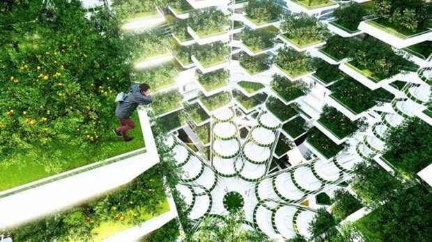 Древообразная ферма Urban Skyfarm