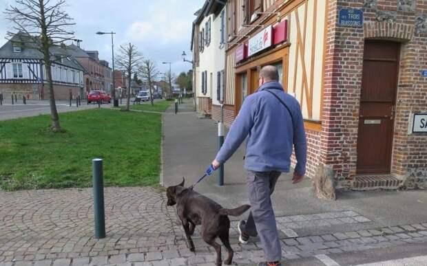 Во французском городе Фекьер мэр запретил собакам долго лаять