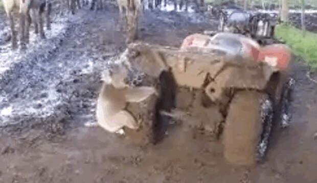 видео, животные, коала, ужас