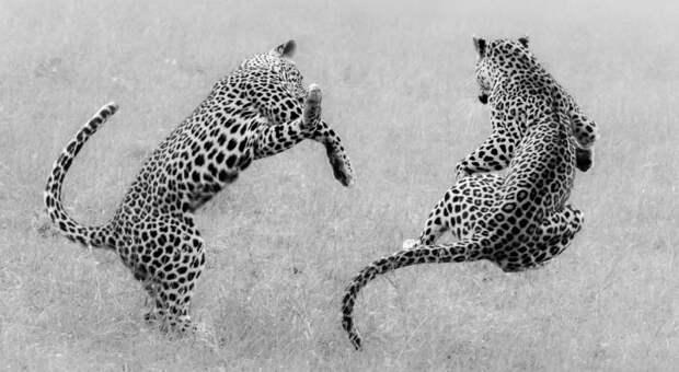 Потрясающие снимки Африки и ее обителей от лучшего фотографа года
