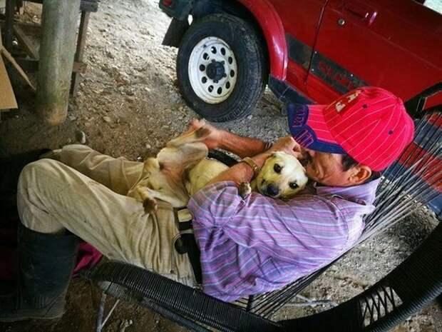 Люди проходили мимо лежащего на земле дедушки. Только пес пытался спасти хозяина