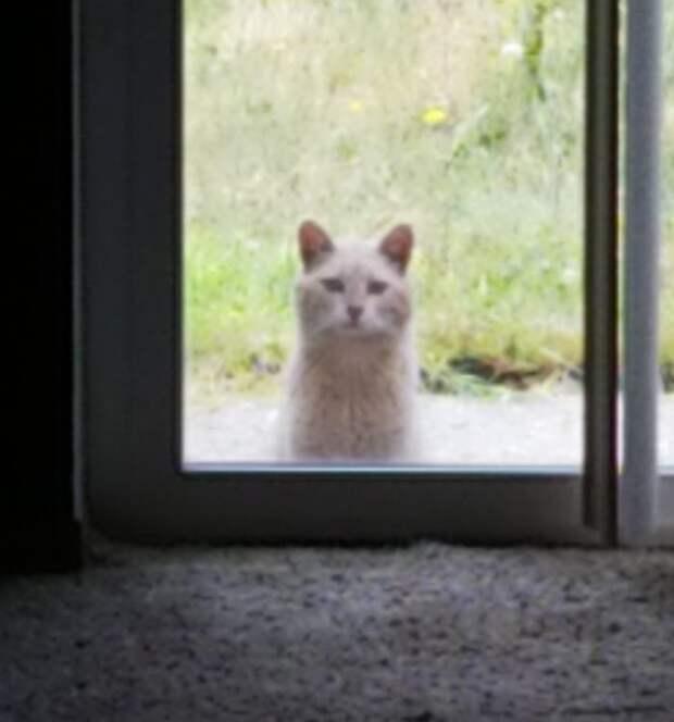 В нагрузку к дому женщина получила дикого кота бездомные кошки, животное и человек, животные, животные в городе, забота о братьях меньших, кот, мило, трогательно
