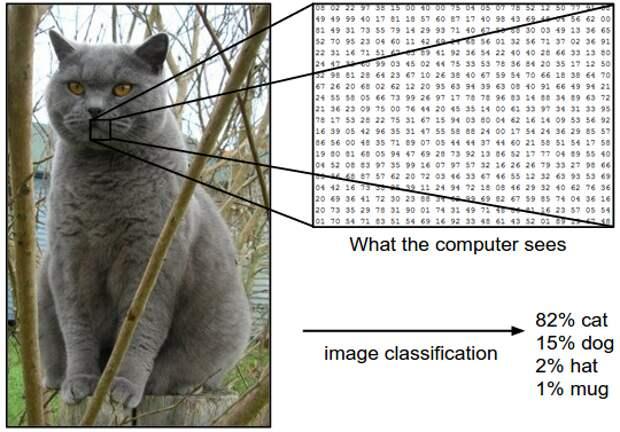 Там, где человек видит кота, компьютер видит математические данные / © Manoj Joshi