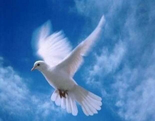 Мы - Мир!!!