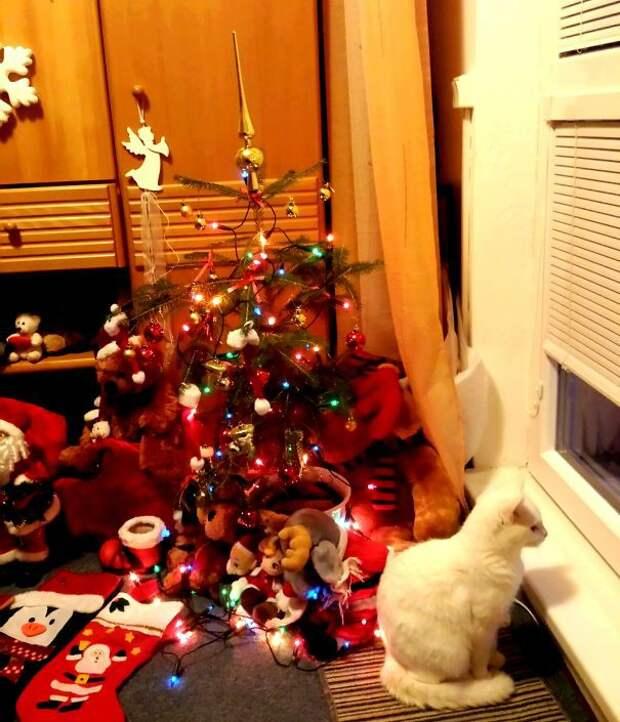 44. В ожидании праздника  елка, кошка, подборка